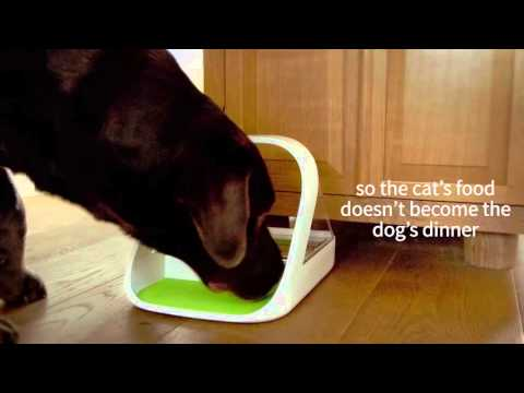 Video Dog Feeder