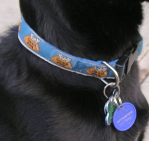 Dog Collars basic and designer