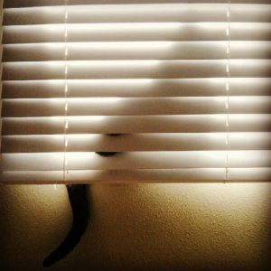 Blinds that are Cat Proof