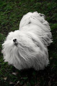 Best Air Purifier for Pet Hair